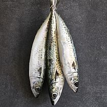 view FRESH MACKEREL, & FILLETS details