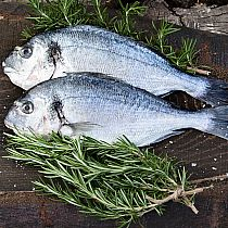 view FRESH GILTHEAD BREAM & FILLETS details