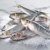 view FRESH SARDINES (sold in 100 gram bags) details